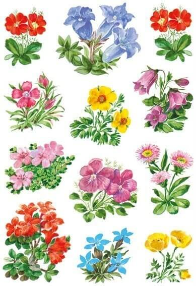 HERMA 3582 10x Sticker DECOR Gebirgsblumen