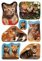 HERMA 3527 10x Sticker DECOR Katzenfotos
