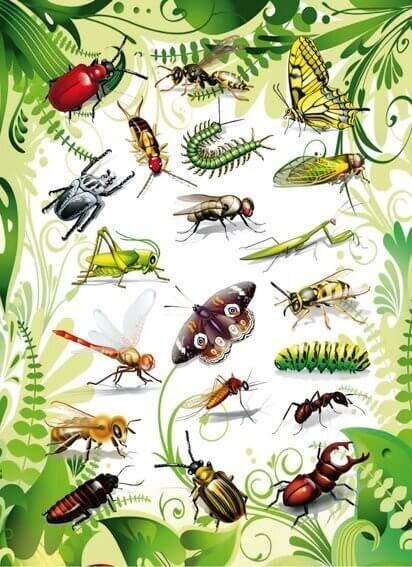 HERMA 3231 10x Sticker MAGIC Insekten 2D Folie