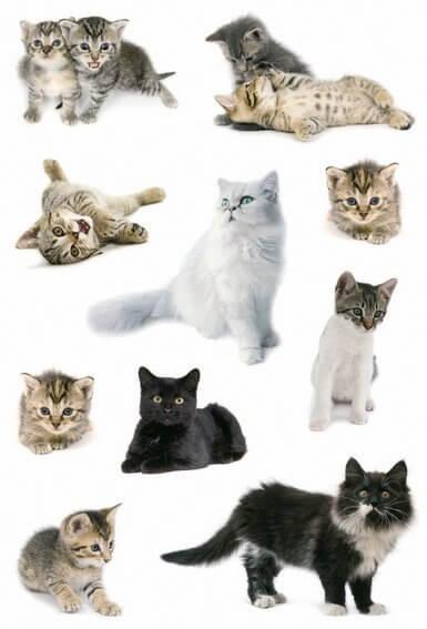 HERMA 3433 10x Sticker DECOR Katzenfotos